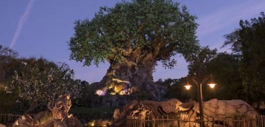 Let's explore Disney's Animal Kingdom