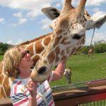 Wild rides and wild animals at Busch Gardens Tampa